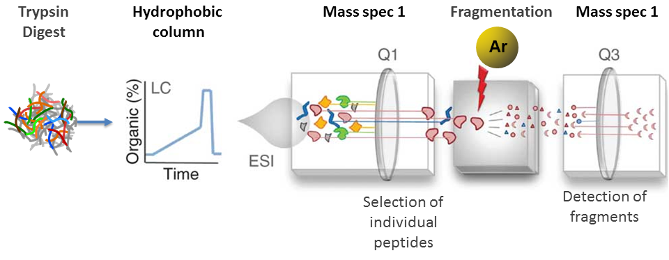 Experimental Setup - Mass Spec